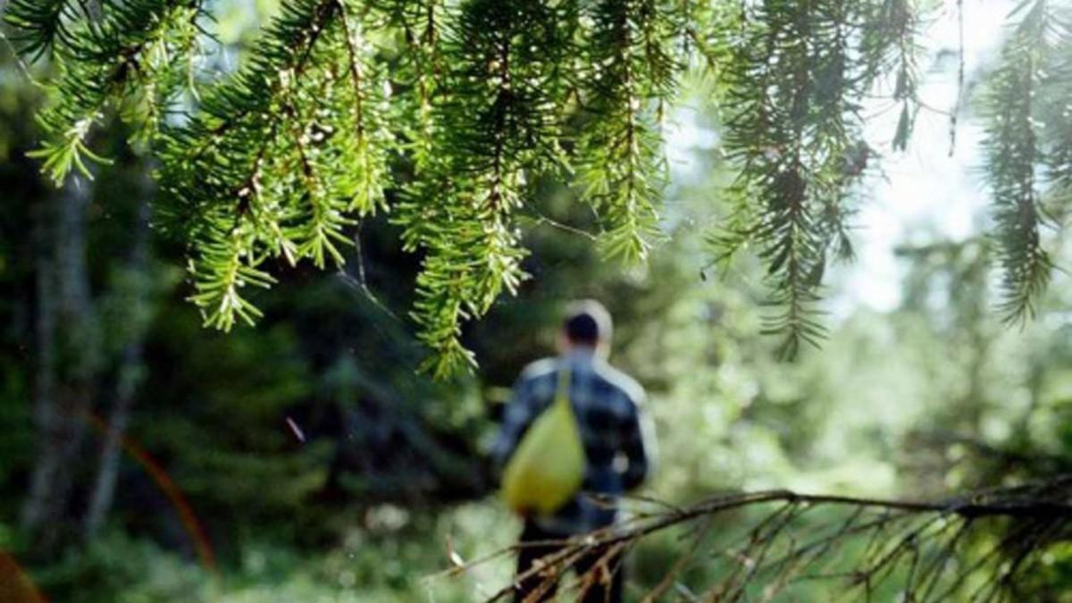 Отправляясь в лес заполните специальную анкету