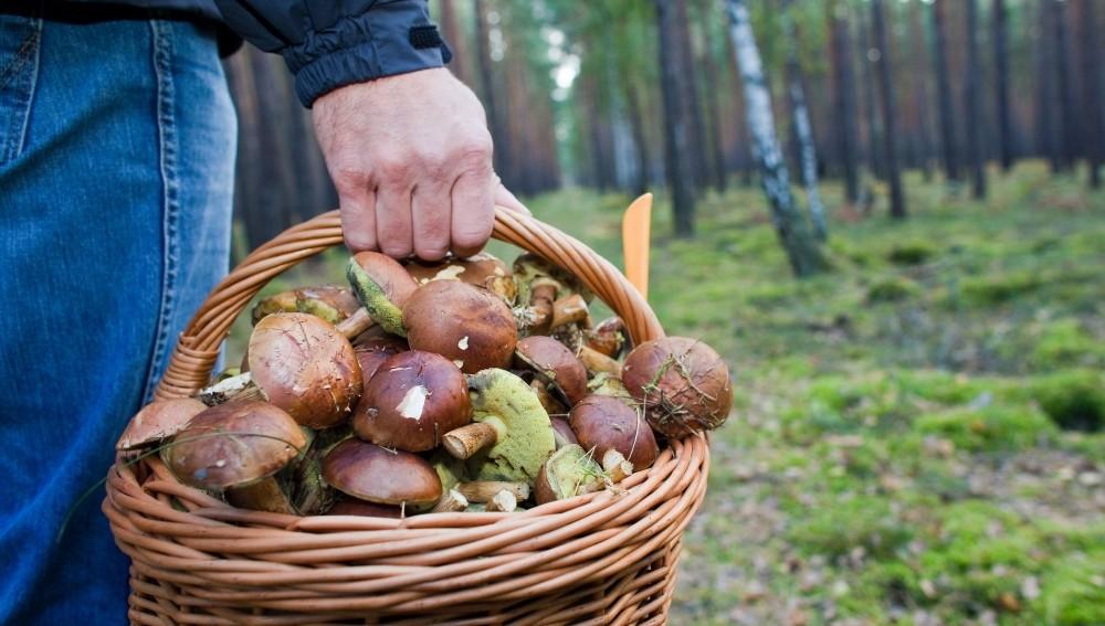 Главное управление МЧС России по Тверской области напоминает жителям Верхневолжья правила поведения в лесу