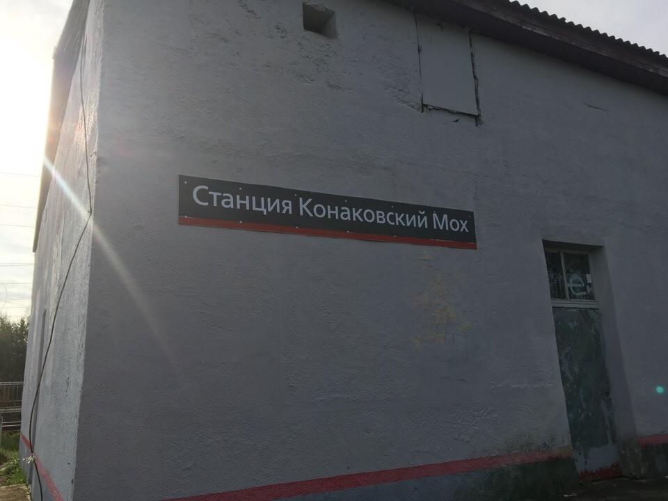 Ночной Конаковский мох